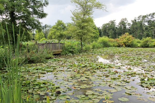 Dc Guide Kenilworth Park And Aquatic Gardens